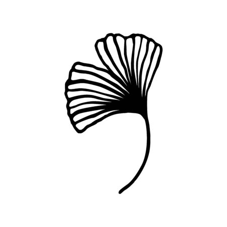 Ginkgo biloba leaf hand drawn contour line. Vector herbal icon in a Trendy Minimalist Style.