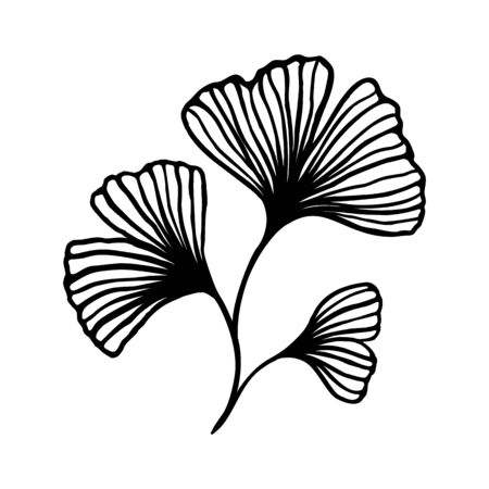 Ginkgo biloba branch with leaves hand drawn contour line. Vector Floral art in a Trendy Minimalist Style. Ilustrace