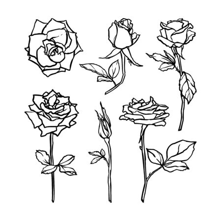 Set Rose Flower hand drawn contour line. Vector abstract Floral in a Trendy Minimalist Style.