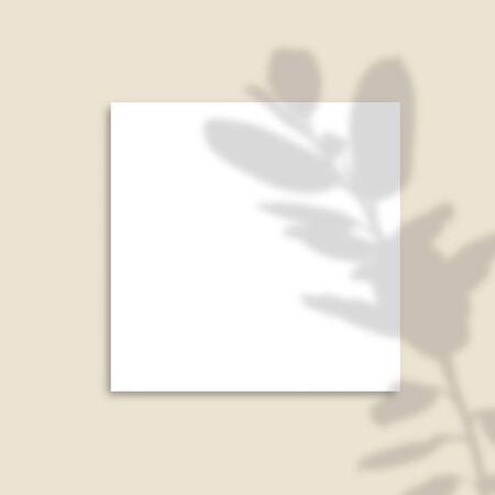 The shadow of the plants. Square Paper Mockup with realistic shadows overlays leaves on beige background.