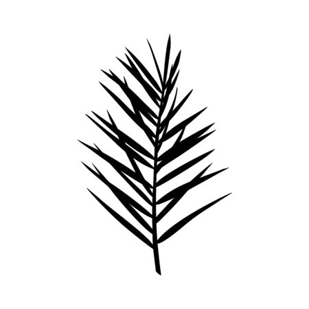 Silhouette of a palm leaf. Black tropical plant isolated on white background. Vector illustration for creating shadows, patterns and logos