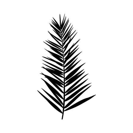 Silueta de una hoja de palma. Planta tropical negra aislada sobre fondo blanco. Ilustración de vector para crear sombras, patrones Ilustración de vector