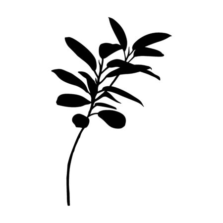Black Ficus plant Silhouette isolated on white background. Vector Illustration.