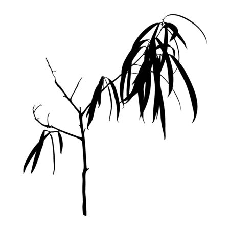 Tropical plant Silhouette isolated on white background. Black Ficus Binnendijkii Vector Illustration.