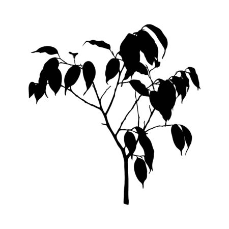Black Ficus Benjamin plant Silhouette isolated on white background. Vector Illustration. Illusztráció