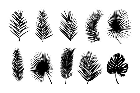 Set of palm silhouettes of palm leaves isolated on a white background. Vector illustration of tropical plants for creating shadows, patterns Illusztráció