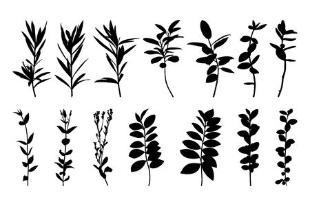 Set silhouettes of tree branches isolated on a white background. Vector illustration of plants for creating shadows, patterns and logos