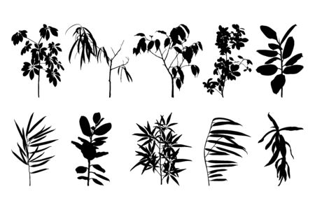 Set of silhouettes of houseplant isolated on a white background. Vector illustration of ficus and other plants for creating shadows, patterns and logos