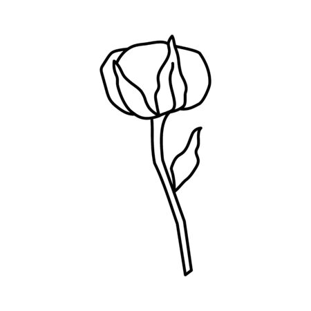 Cotton plant branch in trendy minimal style. Outline organic cotton flower for logo , invitation, tags, print for textile, posters and cards . Botanical greenery vector illustration Çizim