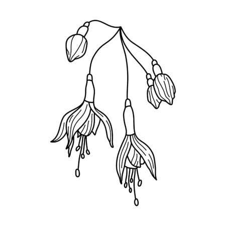 Outline Fuchsia Flower. Line drawing Botanical tropical plant In a Modern Minimalist Style. Vector Illustration.