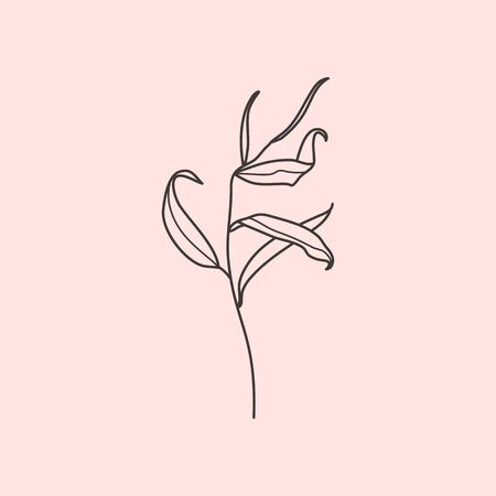 Willow branch with leaves in a trendy minimalistic style. Outline of a botanical design elements. Floral vector illustration. For printing on t-shirts, web design, posters,  creation