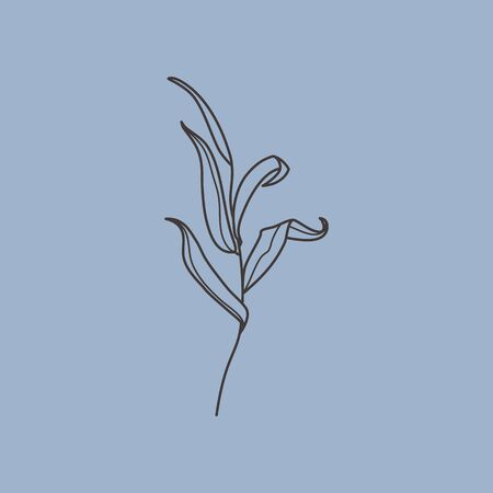 Willow branch with leaves in a trendy minimalistic style. Outline of a botanical design elements. Floral vector illustration. For printing on t-shirts, posters, creation, pattern
