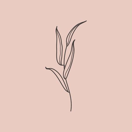 Willow branch with leaves in a trendy minimalistic style. Outline of a botanical design elements. Floral vector illustration. For printing on t-shirts, web design, card,  pattern
