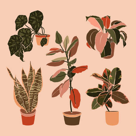 Art collage potted houseplants in a minimal trendy style. Silhouette of sansevieria, begonia and ficus plants. Vector