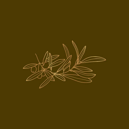 Golden Olive Branch with leaves and fruits in minimal liner trendy style. Botanical illustration