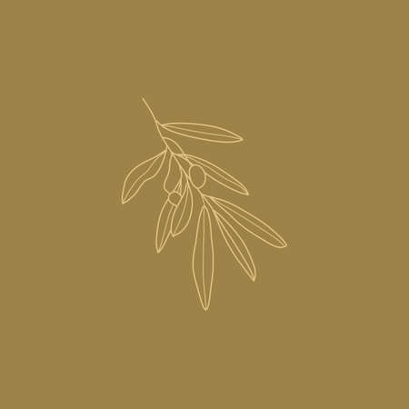 Olive Branch with leaves and Fruit. Outline Botanical leaves In a Modern Minimalist Style. Vector Illustration For printing on t-shirt, Web Design, beauty Salons, Posters Illustration