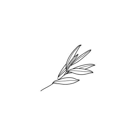 Olive Branch with leaves. Outline Botanical leaves In a Modern Minimal Style. Vector Illustration For printing on t-shirt, Web Design, beauty Salons, Posters