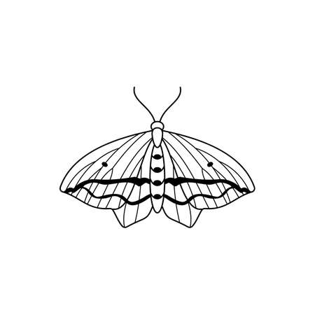 Butterfly icon in a linear minimalist trendy style. Vector Contour illustrations of Insect Moths for beauty salons, manicures, massages, spas, jewelry, tattoos, and handmade artists.