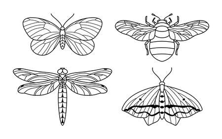 A set of insect icon outlines in a minimalist trendy style. Vector linear illustrations of butterflies, bumblebees and dragonflies for beauty salons, massages, spas, jewelry, tattoos