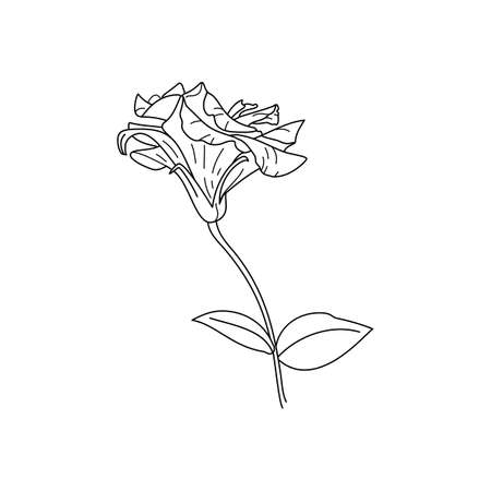 Lisianthus Flowers with leaves. Outline Eustoma In a Modern Minimalist Style. Vector Floral Illustration. For printing on t-shirt, Web Design, beauty Salons, Posters