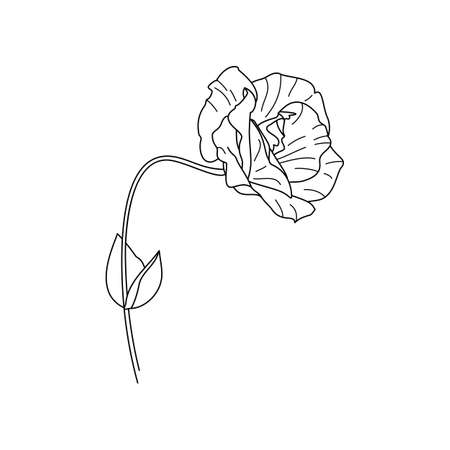 Lisianthus Flowers with leaves. Outline Eustoma In a Modern Minimalist Style. Vector Floral Illustration. For printing on t-shirt, Web Design, beauty Salons, Poster