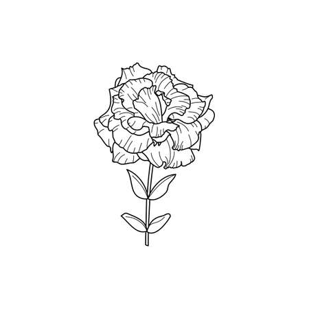Lisianthus Flowers with leaves. Outline Eustoma In a Modern Minimalist Style. Vector Floral Illustration. Illustration
