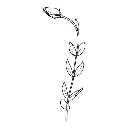 Lisianthus Flowers with leaves. Outline Eustoma In a Modern Minimalist Style.  Floral Illustration.