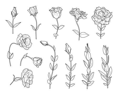 Set Lisianthus Flowers and Branch with leaves. Outline Eustoma In a Modern Minimalist Style.  Floral Illustration. Illustration