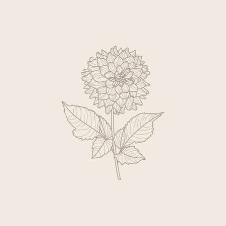 Dahlia Flowers with Leaves in Trendy Minimal Liner Style. Vector Floral Illustration