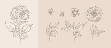 Set Dahlia Flowers with Leaves in Trendy Minimal Liner Style. Vector Floral Illustration