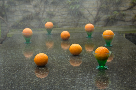 downpour: Garden, downpour and eight oranges in garden