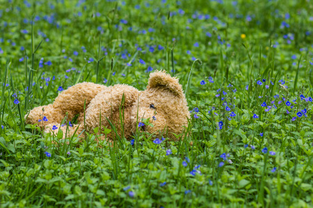 get tired: Forgotten teddy bear in the forest