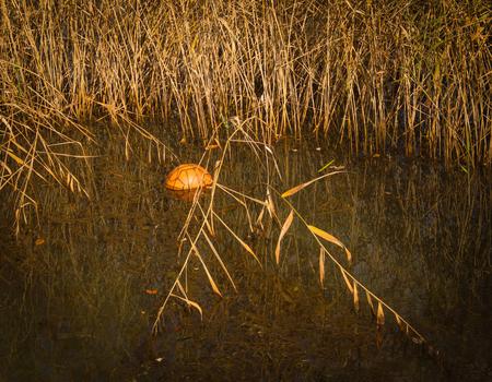 Orange ball in a pond of autumn park