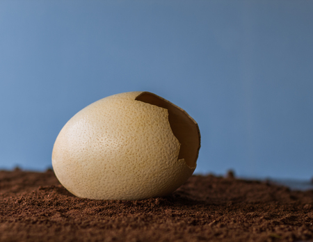 Broken nep big egg lie in the brown structure with blue background Stock Photo