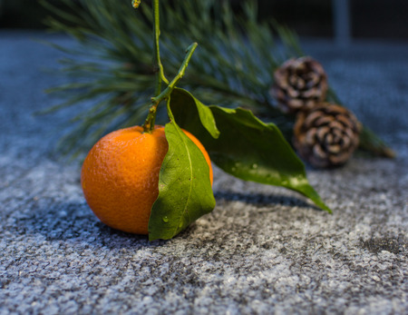 Citrus fruit-tangerine on the foreground and branch of pine-tree with  two pine cone on the background.