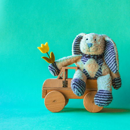 Cute teddy rabbit toy sitting comfortable with yellow tulip on the car and turquoise background. Stock Photo