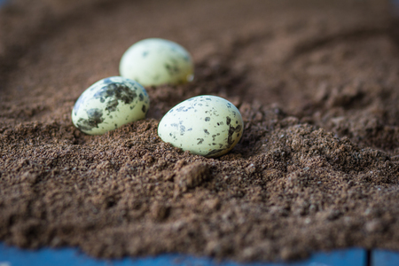 striated: Decorative quail eggslie  in a rough brown structure background.