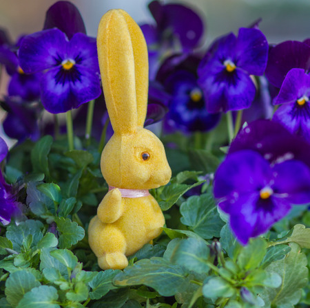 Easter yellow rabbit with love-in-idleness violet background4