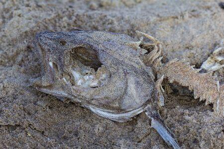 Fish head and bones lying in sand Stock Photo