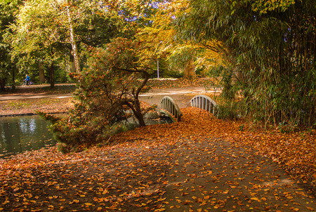 ample: Gold lush exuberantly great autumn in park with small bridge Stock Photo