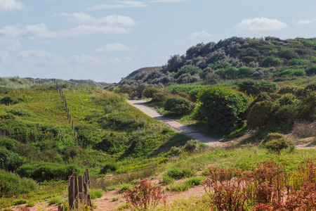 Hills and plants of the dunes of the North Sea Stock Photo