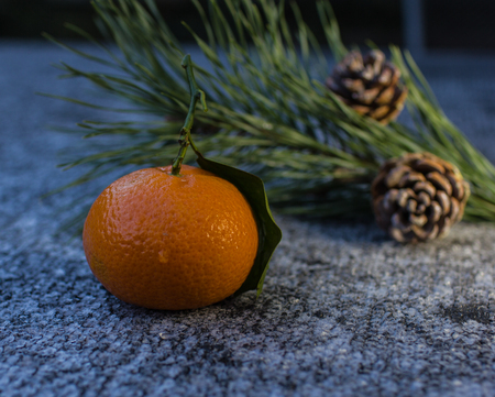 merciless: Citrus fruit-mangerine on the foreground and branch of pine-tree with  two pine cone on the background.