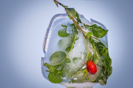 Rosehip in ice