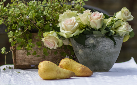 noon: Two pears and white poses on the table in the garden. Stock Photo