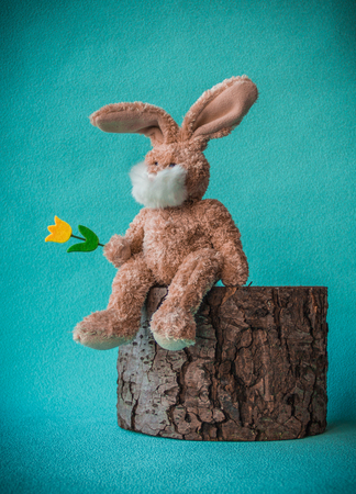Easter teddy rabbit with yellow tulip sitting on the stump, turquoise background, close-up