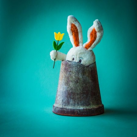 Fearful teddy rabbit with yellow tulip sitting hides in a broken ceramic flower pot.