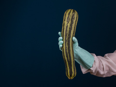 Courgette in the hand of tester with white uniform and blue rubber glove, dark blue background. Concept healthy food
