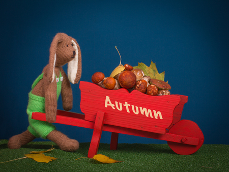 laden: Scene with toy knitted rabbit toy carries a real mushroom in a red wooden trolley with textAutumn