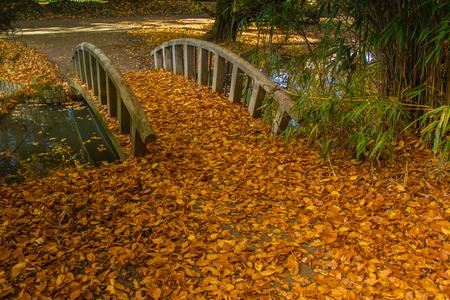 Oosterhout의 공원, Noorth Brabant, 네덜란드, 10 월에있는 잎의 가을 스톡 콘텐츠