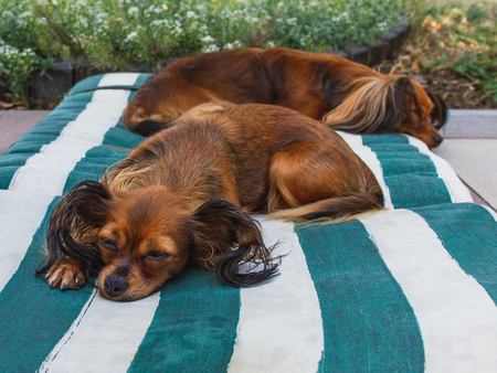 Two outworn dogs slipping outdoor. Imagens